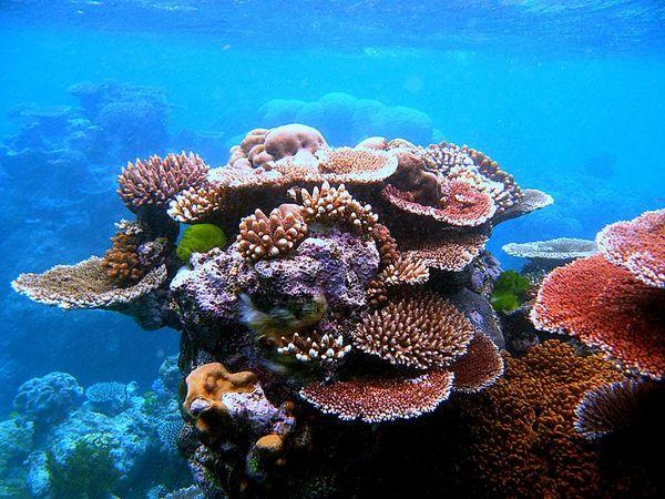Un film solaire à la rescousse de la grande barrière de corail !
